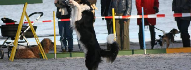 Hunde-Event
